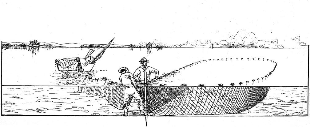 Dictionary of ichthyology for Seine net fishing